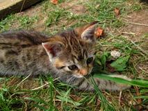 Tabby kitten lying outside. Little tabby kitten lying outside Royalty Free Stock Photo