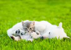 Tabby kitten lying with sleeping White Swiss Shepherd`s puppy on Stock Photography