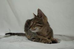Tabby kitten. Lying on white fabric Stock Photo