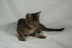 Tabby kitten. Lying on white fabric Stock Image