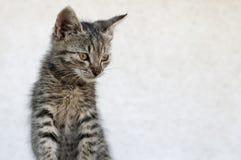 Tabby kitten Stock Photo