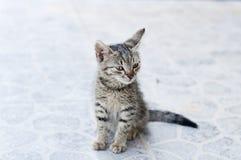 Tabby kitten Royalty Free Stock Images