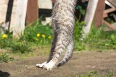 Tabby Kitten Play Outside Immagine Stock