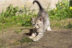 Tabby Kitten Play Outside Royaltyfri Fotografi