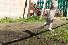 Tabby Kitten Play Outside Arkivfoto