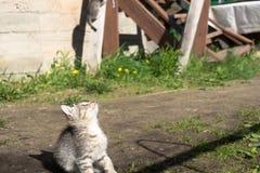 Tabby Kitten Play Outside Royaltyfria Foton