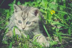 Tabby Kitten Play Outside Retro Immagini Stock Libere da Diritti