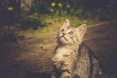Tabby Kitten Play Outside Retro Immagini Stock