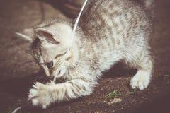 Tabby Kitten Play Outside Retro Immagine Stock Libera da Diritti