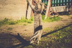 Tabby Kitten Play Outside Retro Fotografia Stock Libera da Diritti