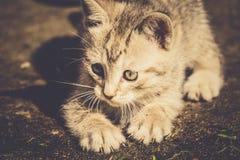 Tabby Kitten Play Outside Retro Fotografie Stock Libere da Diritti