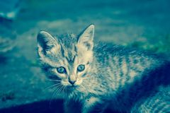 Tabby Kitten Play Outside Retro Fotografie Stock