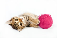 Tabby kitten playing with a ball of yarn Royalty Free Stock Photography