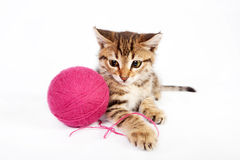 Tabby kitten playing with a ball of yarn Stock Photos