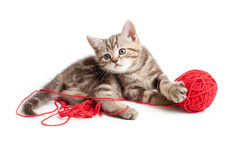 Tabby Kitten Playing Red Clew Royalty Free Stock Photography