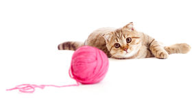 Tabby kitten playing red clew or ball isolated Stock Image