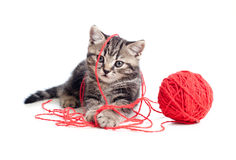 Tabby Kitten Playing Red Clew Or Ball Royalty Free Stock Photography