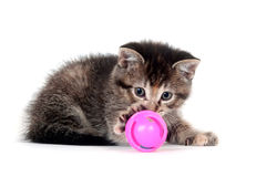 Tabby kitten playing with toy Stock Image