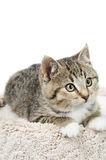 Tabby Kitten Portrait. Tabby kitten lying on a carpeted bed, isolated on a white background Royalty Free Stock Photography