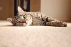 Tabby Kitten que se relaja en la alfombra Imagenes de archivo