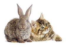 Tabby kitten and rabbit Royalty Free Stock Photos