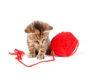 Tabby kitten and red ball of yarn Royalty Free Stock Image