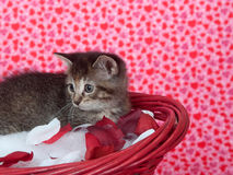 Tabby kitten in red basket Stock Photos