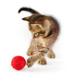 Tabby kitten with red clew Stock Photos