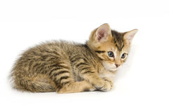 Tabby kitten resting Royalty Free Stock Images