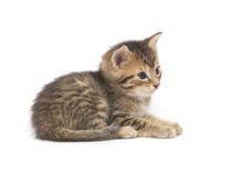 Tabby kitten resting on white background Stock Photos