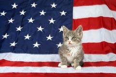 Tabby kitten sitting on American flag royalty free stock image