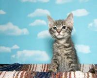 Tabby kitten sitting up stock photography