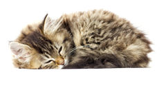 Tabby kitten sleeping Stock Photography