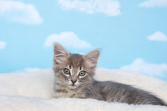 Tabby kitten on soft bed sky background Royalty Free Stock Image