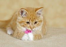 Tabby Kitten som spelar i hus Royaltyfri Foto