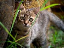 Tabby Kitten Staring en el jardín imagen de archivo