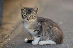 Tabby kitten in the street Stock Photography