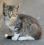 Tabby kitten in the street Royalty Free Stock Image