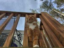 Tabby Kitten sur le porche Image stock