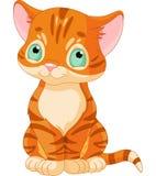 Tabby Kitten sveglia Immagini Stock