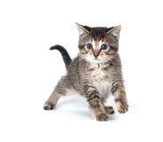 Tabby kitten swinging its paw Royalty Free Stock Images