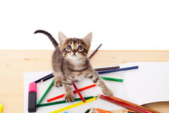 Tabby kitten on table with pencils Stock Photos