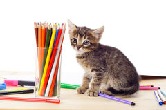 Tabby kitten on table with pencils Royalty Free Stock Photos
