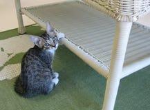 Tabby Kitten Touching een Rieten Lijst stock afbeelding