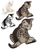 Tabby kitten with variations Stock Photo