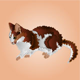 Tabby kitten vector Royalty Free Stock Image
