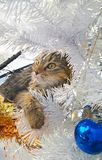 Tabby cat in holiday tree impressionism Stock Image