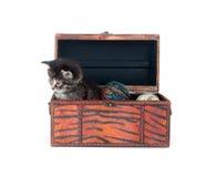 Tabby kitten in a wooden box Stock Photos