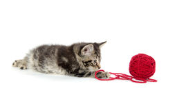 Tabby kitten with yarn Stock Images