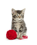 Tabby kitten with yarn Royalty Free Stock Images